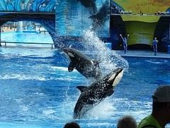 sea-world-personal-injury-case